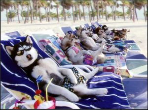 cheap <a target='_blank' href='Cheap Vacation Packages'>vacation packages</a> - Funny picture of dogs lounging on the beach